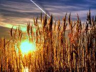 SOLARIS: Bezdrátové IR bariéry dobíjené Sluncem